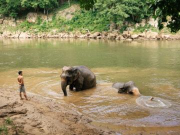 เดินเล่นและอาบน้ำช้าง ในปางช้างที่สนุกได้โดยไม่ต้องขี่เจ้าตัวโต, Elehant Haven Thailand, ปางช้างไทรโยค
