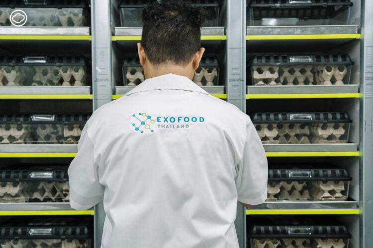 Exofood ต้นแบบฟาร์มแมลงในเมือง กับเป้าหมายเพื่อทดแทนแหล่งอาหารในอนาคต