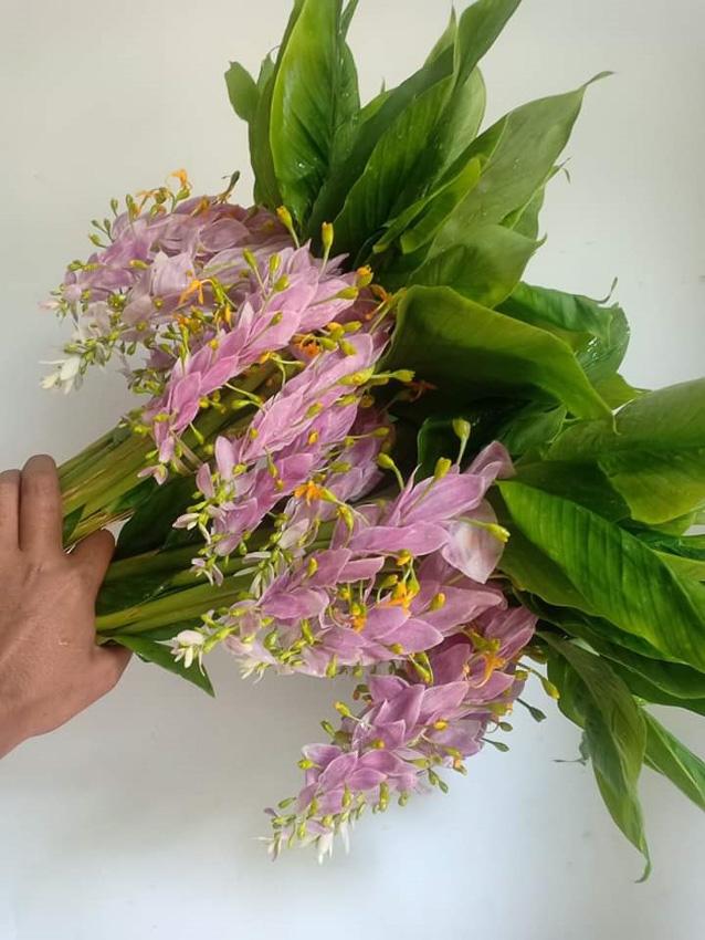 ดอกเข้าพรรษา ดอก 'บะเด่งมะหน่าย' ในนิทานพม่าที่ทำให้ช่างทองร้องไห้