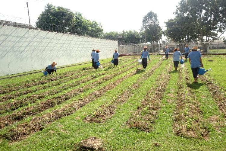 ภารกิจสร้างเรือนจำสุขภาวะ ด้วยการฝึกโยคะให้ผู้ต้องขังและทำสวนเกษตรกรรมหลังกำแพง, นักโทษ, เรือนจำ, ผู้ต้องหา