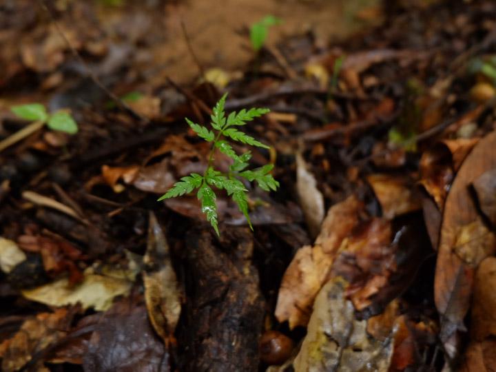 ชนเผ่าพื้นเมือง เมล็ดพันธุ์ของโลกผู้รักษาเมล็ดพันธุ์พืชดั้งเดิมเพื่อส่งต่อให้ลูกหลาน
