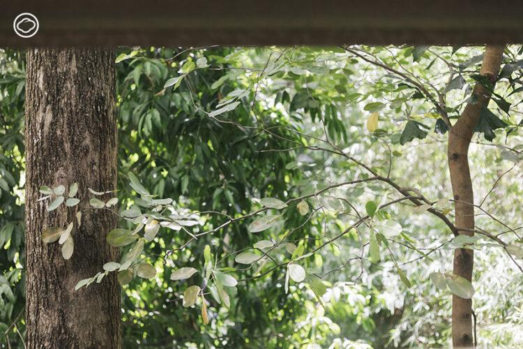บ้านสวนจันทิตา โฮมสเตย์ของครูวัยเกษียณที่ปลูกต้นไม้ไว้ตั้งแต่ 30 ปีก่อน