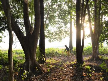 ป่าจอบ ป่าบังเอิญตีนดอยเชียงดาวที่พิสูจน์ว่าการ ปลูกต้นไม้เป็นป่า ไม่ใช่ฝันที่ไปไม่ถึง