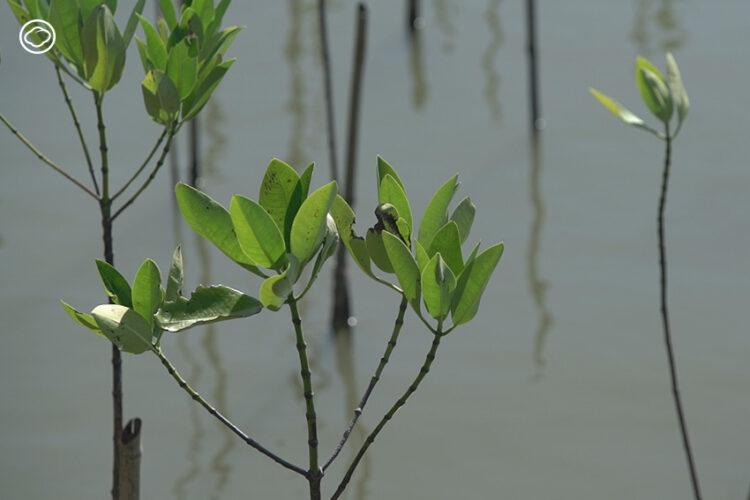 mangrove-forest-school-51
