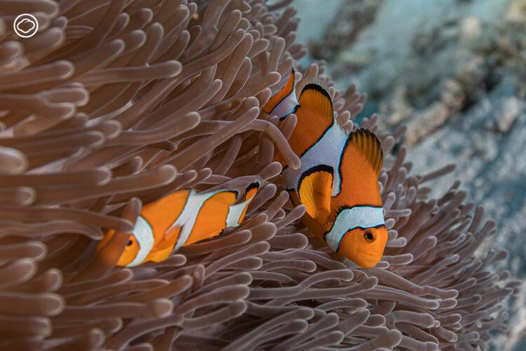เมื่อการไม่แบ่งเพศในโลกใต้ทะเล ทำให้ทุกชีวิตเท่าเทียมและอยู่อย่างมีอิสระ, สัตว์ทะเล