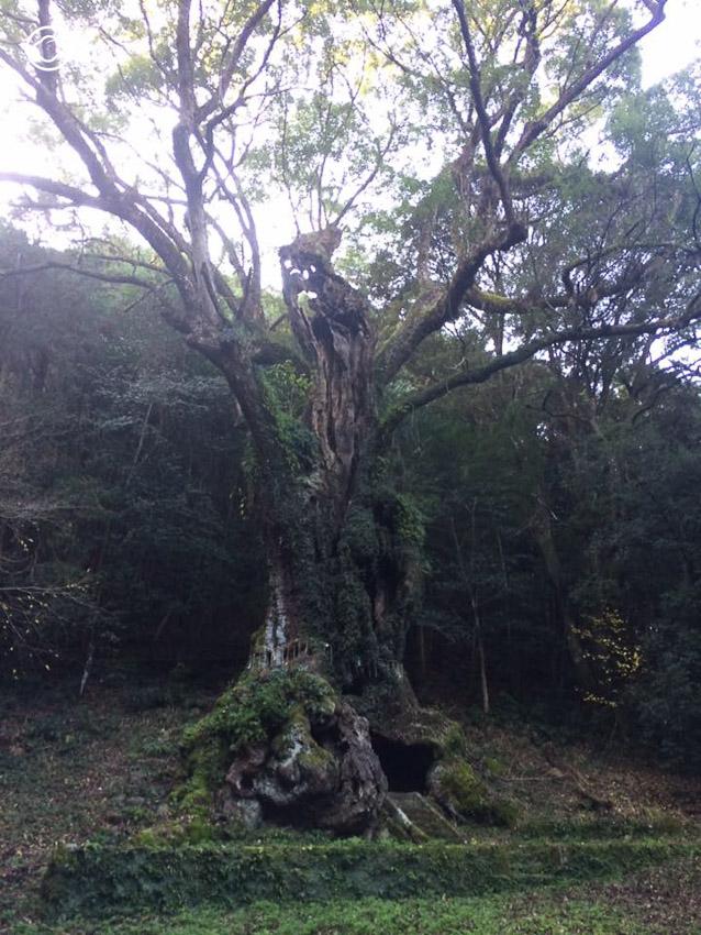 แม่และลูกสาวตะลุยตามหาโตโตโร่ ที่ต้นไม้ยักษ์ 3,000 ปีในคิวชู, ที่เที่ยวตามรอยโตโตโร่ คิวชู