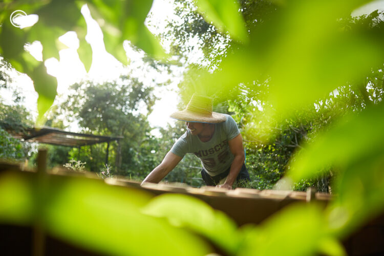 ชีวิตนอกจอในบ้านสวนของ 'อนุวัต จัดให้' ผู้จัดได้ทุกข่าว มาเล่าเรื่องต้นไม้ได้ทุกต้น, หนุ่ม-อนุวัต เฟื่องทองแดง