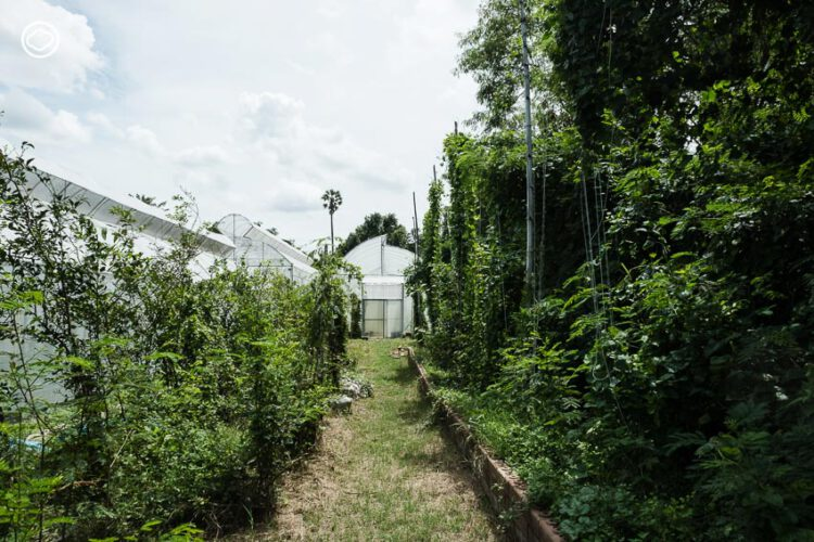 Devanom Farm ฟาร์มฮอปส์พันธุ์ไทย ที่เรียนรู้เรื่องการทำเบียร์ด้วยวัตถุดิบไทยแห่งแรกของไทย