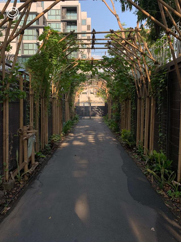 Permaculture สวนแบบนิยมธรรมชาติของร้านโบ.ลาน เพื่อสร้างระบบสิ่งแวดล้อมใหม่ในพื้นที่ขนาดจำกัด