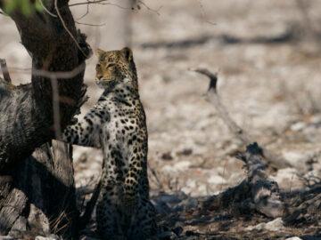 คมเขี้ยวเสือห้วยขาแข้ง รอยที่สอนช่างภาพ NG และเจ้าหน้าที่ป่าไม้ภูฏานด้วยวิถีสัตว์ป่า, สารคดีสัญชาติไทย, ม.ล. ปริญญากร วรวรรณ