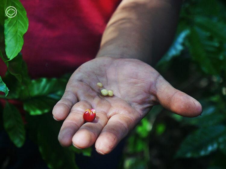ตามกลิ่นกาแฟแอนติกัว กัวเตมาลา หาเบื้องหลังรสและกลิ่นเข้มข้นที่คอกาแฟทั่วโลกยอมรับ, antigua coffee