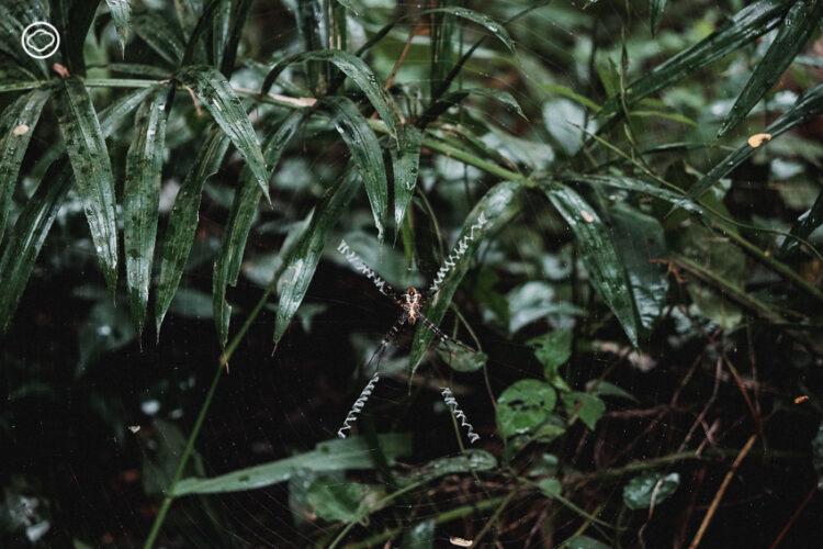 Forest Bathing เข้าป่าไปอาบธรรมชาติ ล้างความเครียดด้วยเสียงน้ำ ใบไม้ นก และแมลง, อาบป่า
