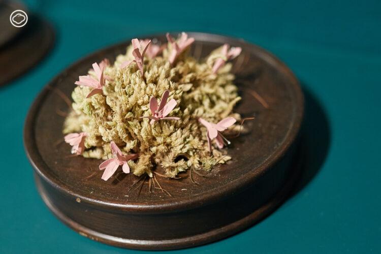นิทรรศการ Lost in Greenland สวนดอกไม้กระดาษที่รวมพืชพันธุ์จาก 3 เขตภูมิอากาศมาจำลองไว้ในห้องเดียว