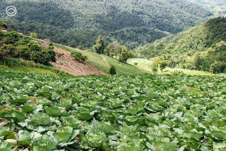พะลัง : คาเฟ่ที่สกัดพลังสะสมของดวงอาทิตย์ในผักปลอดภัยของเชียงรายเป็นน้ำผักเพื่อสุขภาพ, Palang