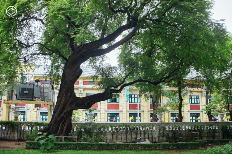 ต้นมะขามและจามจุรียักษ์ สวนสราญรมย์