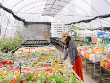 Wastegetable ฟาร์มผักบนดาดฟ้ากลางอนุสาวรีย์ที่ปลูกผักเพื่อรักษาโลกและชุมชนไปพร้อมกัน