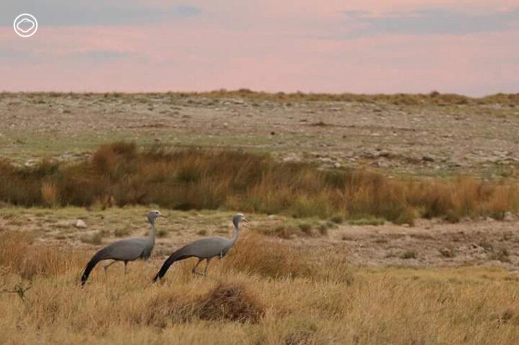 เที่ยว นามิเบีย ประเทศทะเลทรายที่เก่งเรื่องดูแลสัตว์ป่าแอฟริกาใกล้สูญพันธุ์