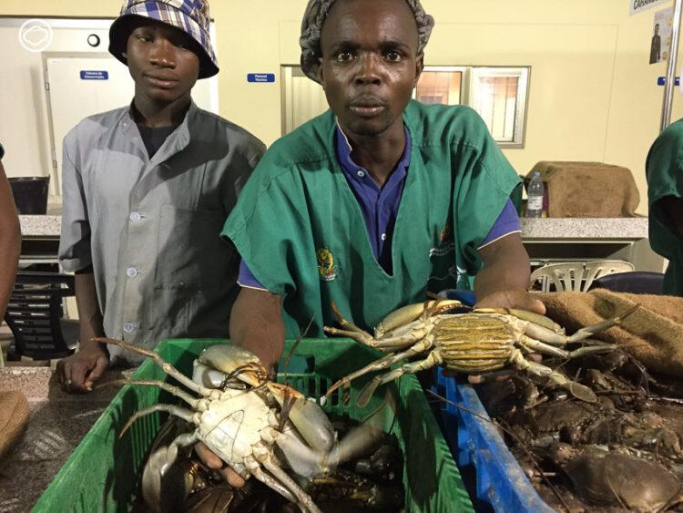 กุ้งหอยปูปลา ทรัพยากรทางทะเล โมซัมบิก ที่คนโมซัมบิกไม่ได้กิน แต่เราได้กิน