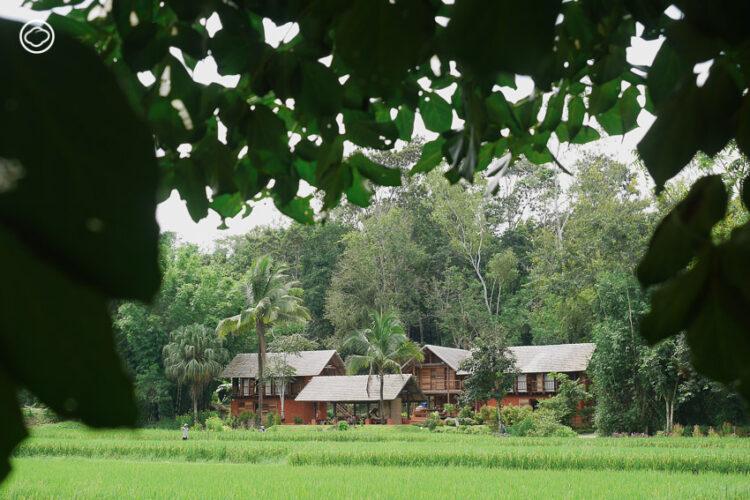 Ahsa Farmstay ฟาร์มสเตย์ที่ให้คุณดำนา เดินป่า ปรุงอาหารท้องถิ่น บนดอยแม่สลอง เชียงราย