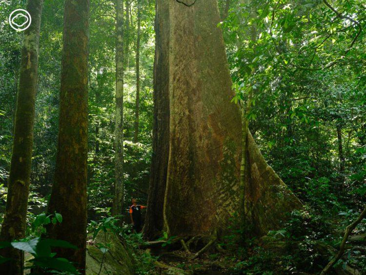 10 คุณปู่ต้นไม้ใหญ่ทั่วไทยในหนังสือ Gallery of Trees ที่รวบรวม 'รุกขมรดก' ทรงคุณค่าจากทั่วประเทศ