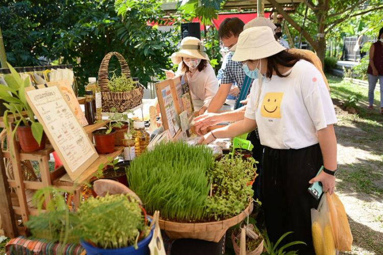 ตลาดสวนผักคนเมือง (City Farm Market) นนทบุรี