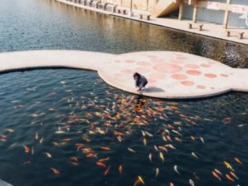 คลองญวนชวนรักษ์ พื้นที่สาธาณะกลางนครสวรรค์ที่บำบัดน้ำเสียมาเลี้ยงปลาคาร์ฟ 2 หมื่นตัว