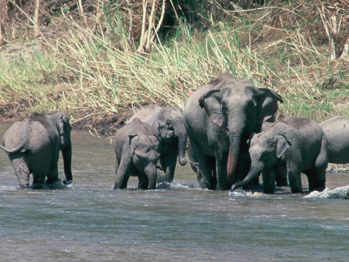 'คน ช้าง ป่า' บทเรียนการเข้ามาอยู่ในบ้านของสัตว์ป่า คือเข้าป่าพร้อมที่ว่างในหัวใจ