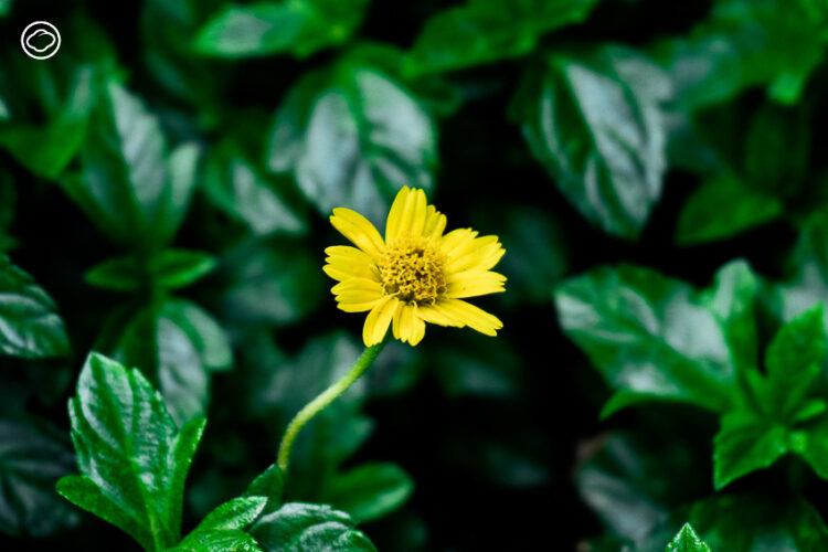 8 พืชพันธุ์ไม้คลุมดินปลูกแทนหญ้า ได้เขียว ได้ดอก แต่ไม่ต้องดูแล