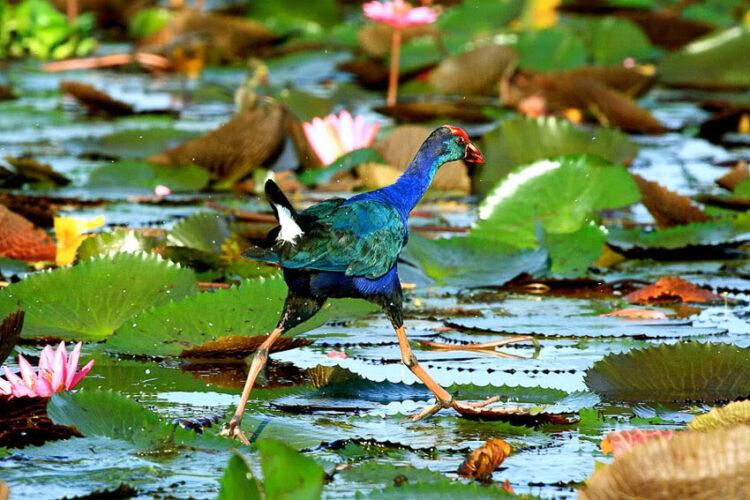 ทำไมนกบางชนิดถึงบินไม่ได้ ทั้งที่สิ่งมีชีวิตวิวัฒนาการขึ้นเรื่อยๆ ตามกาลเวลา