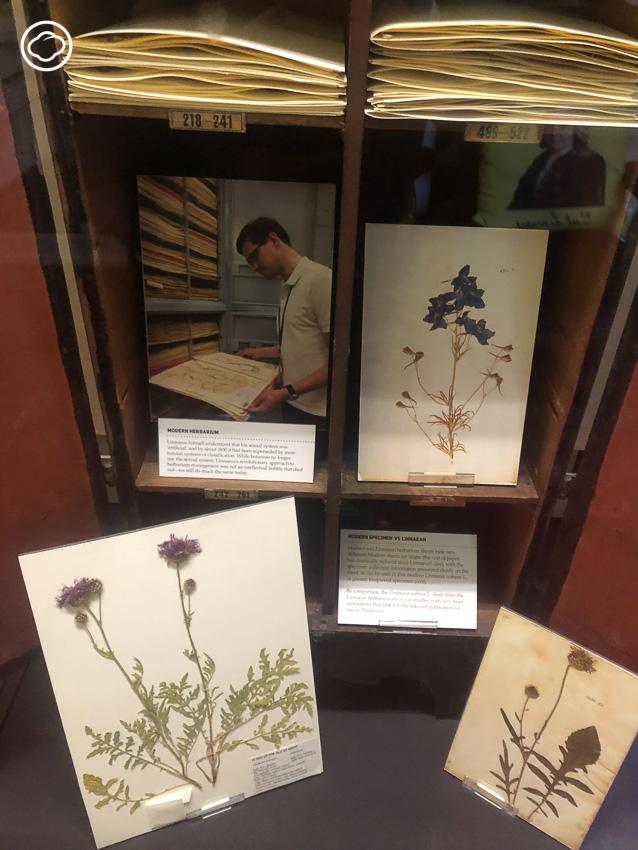 เดินทัวร์ The Linnean Society of London สมาคมธรรมชาติวิทยาที่เก่าแก่ที่สุดในโลกกลางลอนดอน