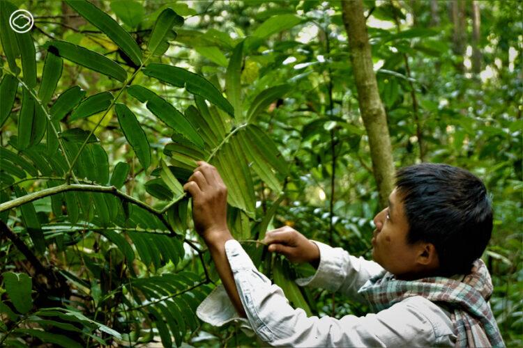 เดินป่ากับคนรักเฟิร์น เรียนรู้ ภูมิปัญญา ปกาเกอะญอ เรื่องพืชที่บอกความสมบูรณ์ของป่า