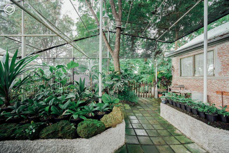 โรงเรือนอนุบาลต้นไม้ประเภทต่างๆ ทั้ง 6 โรงเรือน 1 โรงเรือนกระบองเพชร 2 โรงเรือนไม้แล้ง 3 โรงเรือนไม้ชื้น และลานสำหรับไม้แล้ง