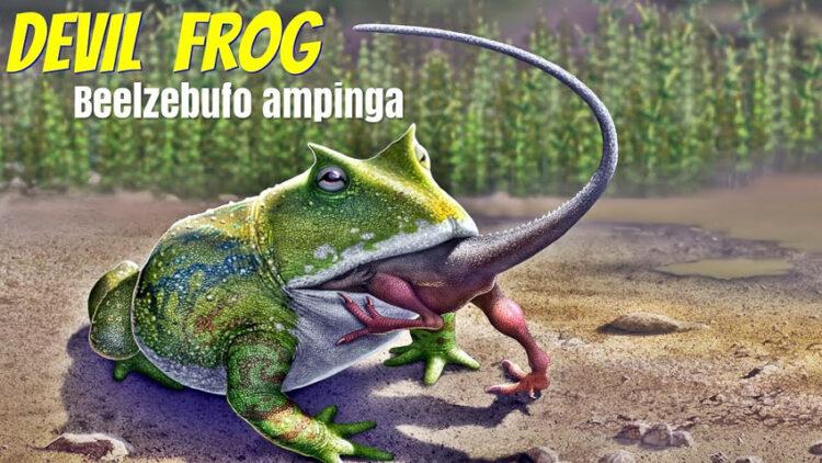 Beelzebufo ampinga สมญากบปีศาจ (Devil Frog