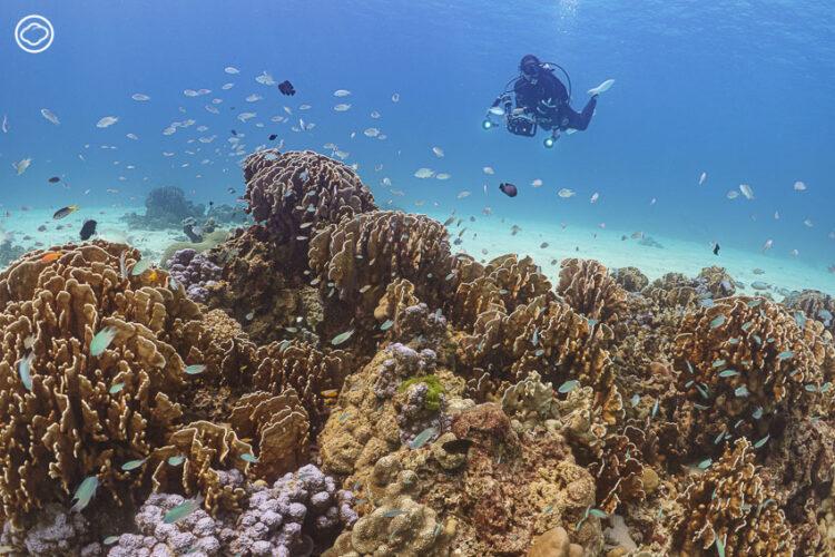 แนวปะการังแข็งที่สมบูรณ์ของเกาะราชาน้อย