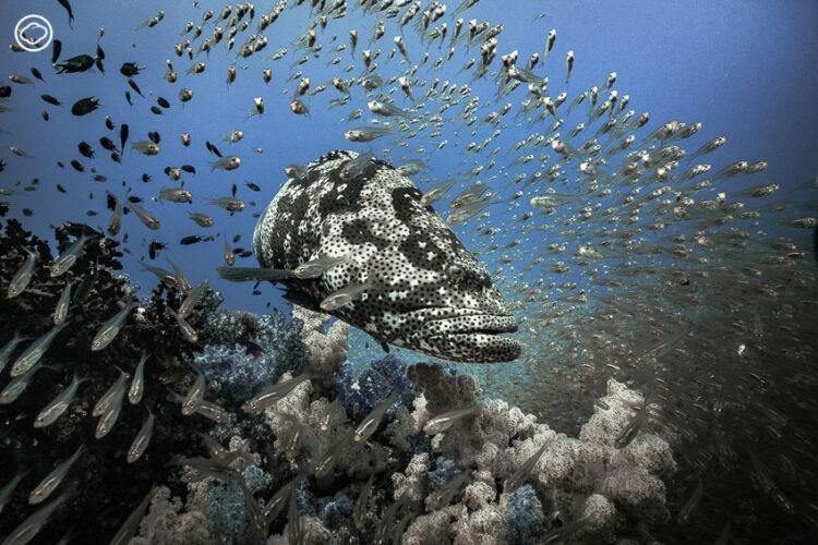 ท่องอดีตแหล่งดำน้ำเมืองไทยที่ได้ชื่อว่า 1 ใน 10 สุดยอดแหล่งดำน้ำที่ดีที่สุดของโลก