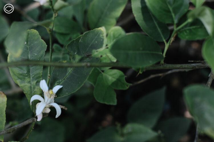12 ไม้ดอกน่าปลูกที่คุณอาจไม่เคยรู้ว่ามันกินได้ ทั้งสวย เลี้ยงง่าย และอร่อย