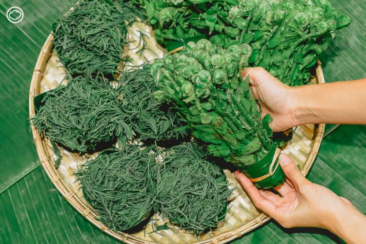 11 นานาผักพื้นบ้านหากินยากจากทั่วประเทศไทย