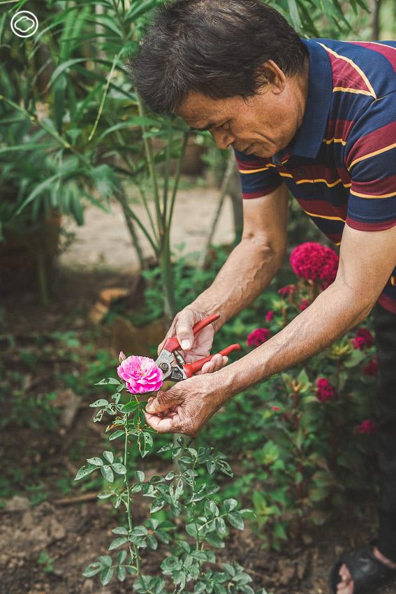 ยักษียักษา แบรนด์เครื่องหอมที่ใช้ดอกกุหลาบจากแปลงสวนหน้าบ้านผู้สูงวัยในชุมชน