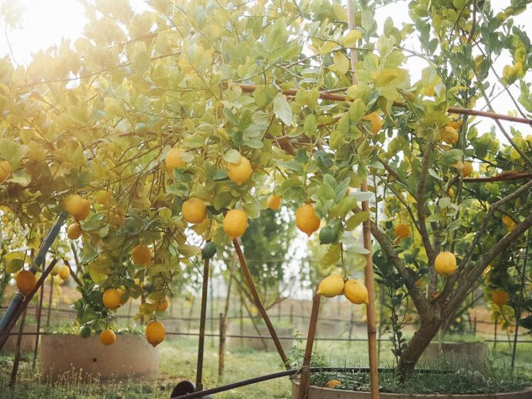 พสุธารา, สวนเลมอนจากผืนดินและน้ำเทือกเขาตะนาวศรี จ.ราชบุรี