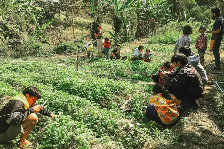 ลายแทง 8 ไร่ ฟาร์ม สวน ชุมชนวิถีอินทรีย์ เที่ยวทั่วไทยแบบเรียนรู้อยู่กับธรรมชาติ