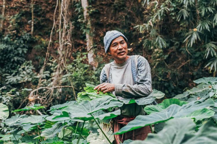 สหายน่าน เพอร์มาคัลเจอร์, ฟาร์มสเตย์กลางป่าที่สอนการใช้ชีวิตด้วยตัวเองร่วมกับธรรมชาติ จ.น่าน