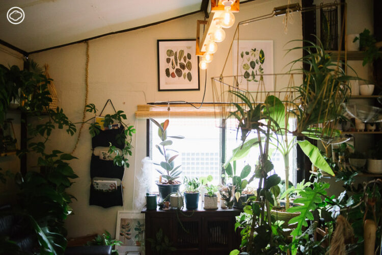 สองเพื่อนสนิทจาก Creative Agency ชวนกันเปิดพลูโต houseplant studio ร้านต้นไม้เล็กๆ ในพื้นที่ส่วนตัว มีทั้งหนังสือ งานศิลปะ ของแต่งบ้าน และโต๊ะดูดวง