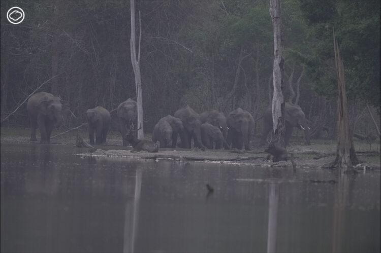 ไอ้ด้วน ช้างป่าที่ใครๆ ก็ว่าดุร้าย กับการสอนวิชาเติบโตภายในจิตใจให้มนุษย์