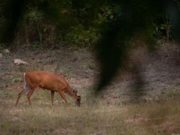 ขึ้นกระบะไปส่องสัตว์ ถ่ายภาพสัตว์ป่า และนอนตีขาในน้ำตกที่เขาใหญ่กับไกด์ท้องถิ่น