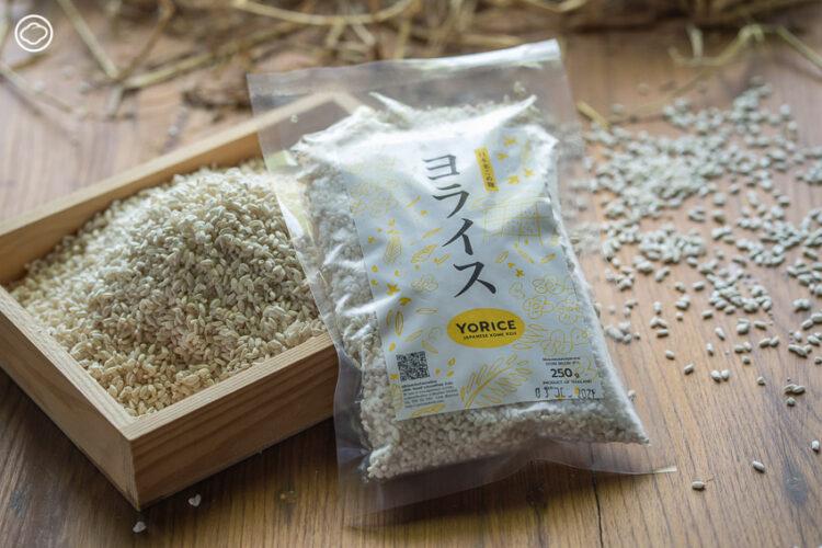 จากภูมิปัญญาอาหารของญี่ปุ่นสู่เครื่องดื่มเพื่อสุขภาพจากข้าวพื้นบ้านไทย ที่ช่วยเหลือพี่น้องเกษตรอินทรีย์ ส่งเสริมข้าวพันธุ์ไทยและแก้ปัญหาอาหารขาดแคลนในค่ายผู้อพยพ