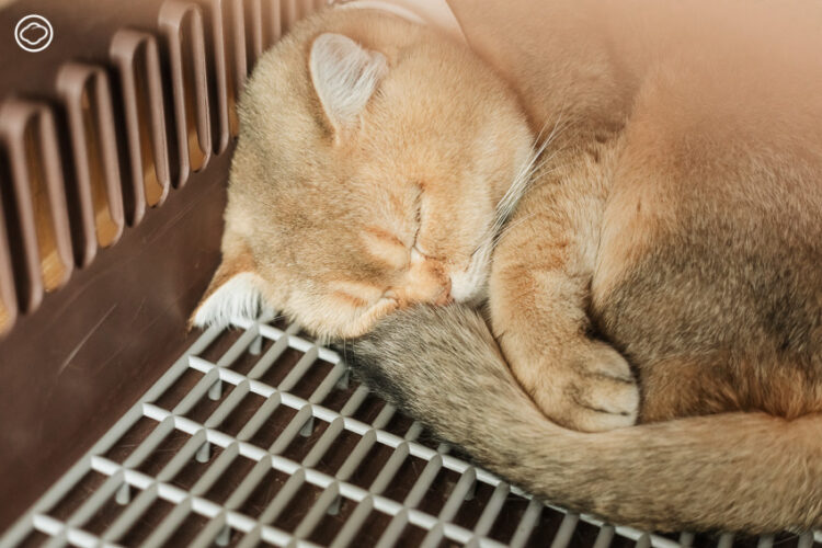 เพจเล่าเรื่องแมวนักเดินทางที่ตั้งใจเป็นความสุขทุกวันให้เหล่าทาส