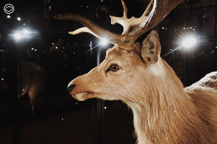 ทริปปารีสสานฝัน เที่ยวแกลเลอรี่วิวัฒนาการสิ่งมีชีวิต สมจริงทั้งแสง สี เสียง สัตว์