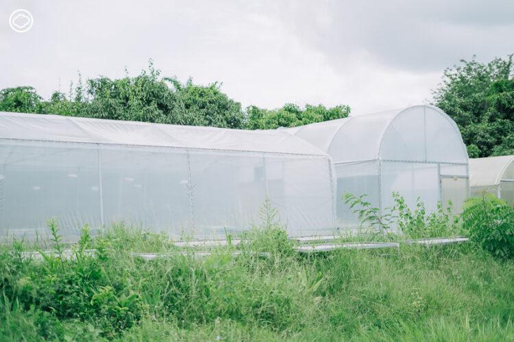 วิสาหกิจชุมชนบ้านคลองสิบสาม (ฟาร์มจ่าทูล), กลุ่มผู้ผลิตสมุนไพรอินทรีย์รายใหญ่จากการรวมพลังของเกษตรกร