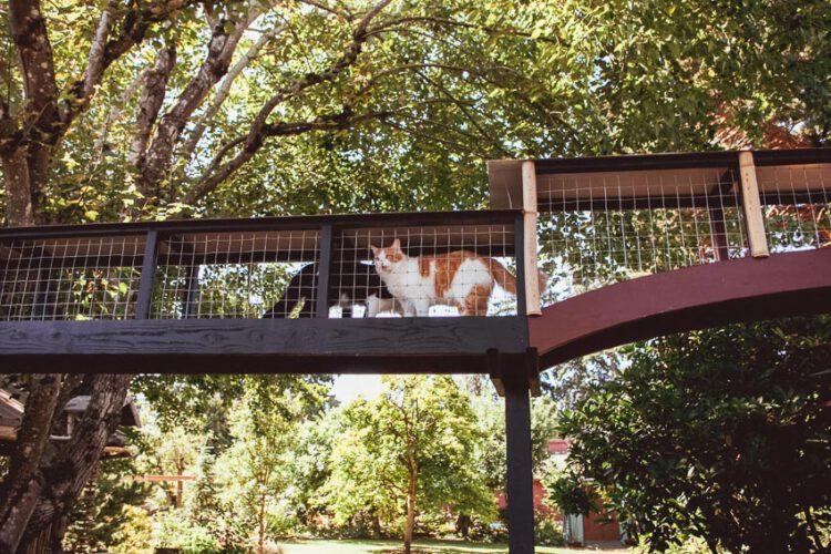 เยี่ยมชม Catio บริเวณตากอากาศสำหรับสัตว์เลี้ยงในบ้าน ที่ทำให้แมวได้พักผ่อนหย่อนใจอย่างมีความสุข