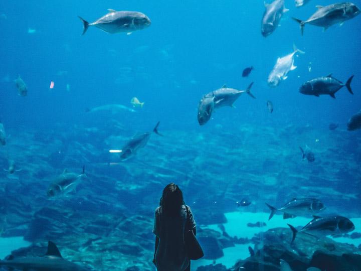 การทดลองที่สรุปผลว่า ปลารู้สึกเจ็บ ซึมเศร้า และอกหัก ได้ไหม